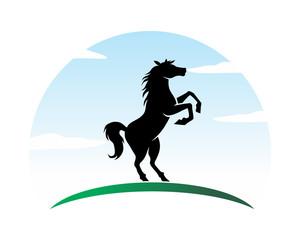 black stallion horses stallion mustang mare silhouette image
