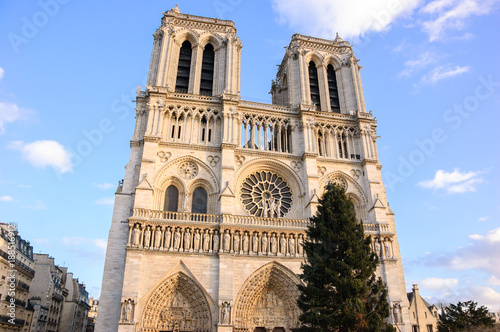 Christmas Tree In Front Of The Notre Dame Cathedral In Paris