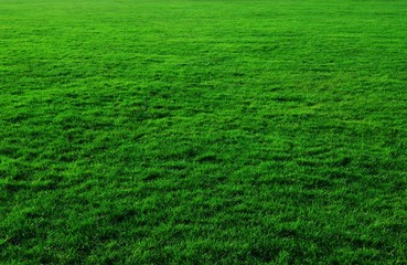 A green meadow
