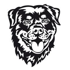 Rottweiler - Vector illustration of a purebred dog face