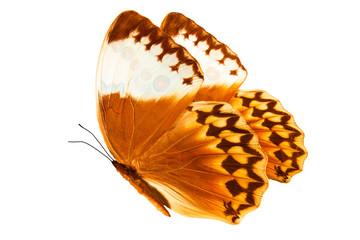 Бабочка в полёте с большими коричнево-белыми крыльями и узором на них. Изолирована на белом фоне.