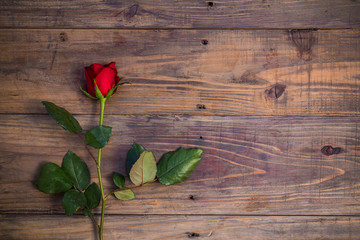 Red rose on wooden. Valentine's day composition of a red rose lying on a floor.