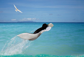 Photo sur Aluminium Dauphins Manta ray jumping out sea, bird flying in sky.