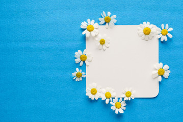 daisy flowers on the empty card