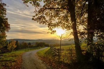 Germany, Bavaria, Upper Bavaria, Miesbach, Taubenberg, forest track in autumn at sunrise