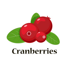 Cranberries isolated icon. Vector illustration for pattern, badge, label, textile