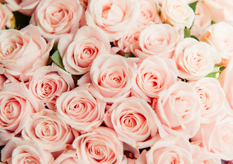 Beautiful blooming Rose pink flowers background, vintage tone. Romantic love concept.Pink rose Background for Valentine concept background.