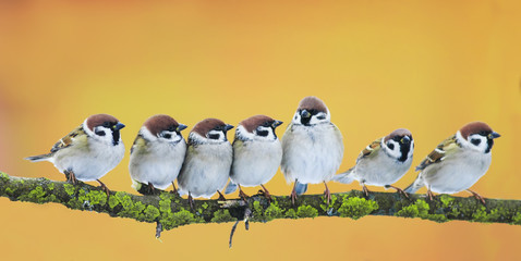 Wall Mural -  lot of little funny birds sitting in a bright Sunny spring Park