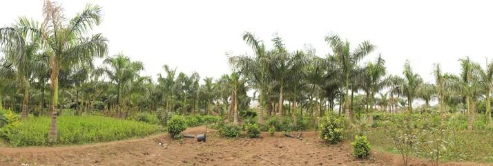 Arecanut based Mixed plantation