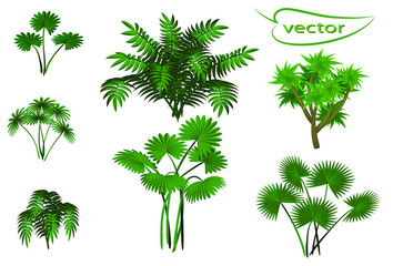 Palm trees, a Set of jungle vegetation groups that are isolated on a transparent background.vector illustration