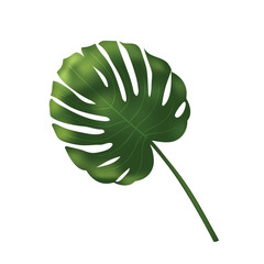 Vector palm leave, jungle leaf set isolated on white background. Tropical botanical illustration, green foliage, floral elements