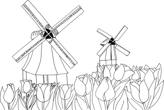 Blooming tulips on the background of windmills. Holland landscape. Freehand sketch drawing for adult antistress coloring book