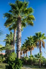 Palms on the background of a blue sky