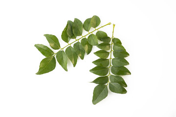 Top View of Fresh Green Curry Leaves