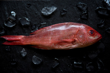 Fresh Whole Red Snapper on Black Background and Ice