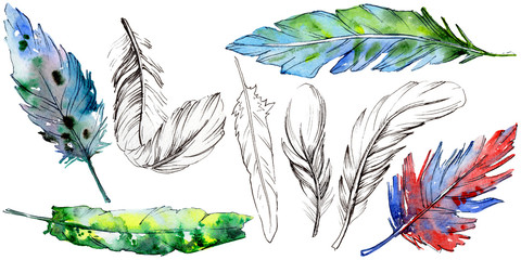 Watercolor bird feather from wing isolated. Aquarelle feather for background, texture, wrapper pattern, frame or border.