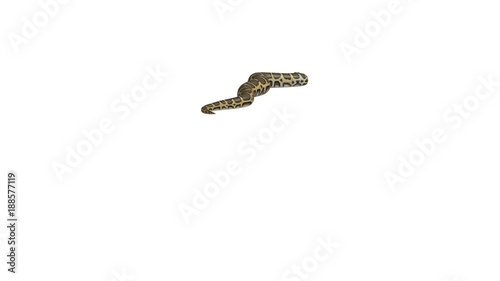 Realistic 3D Animation of a Crawling Burmese Python With