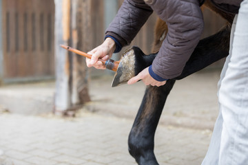 protection of horse  hoof