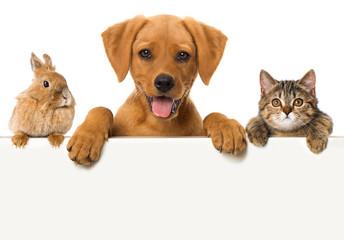 Haustiere blicken über eine Mauer