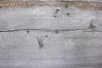 Foto op Plexiglas Graffiti Texture of an old tree. Organic wood texture background