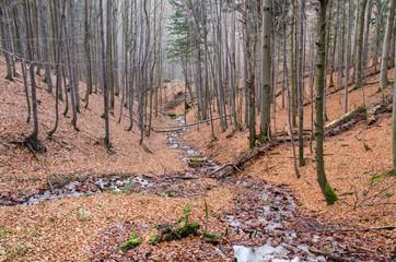 Forest Gully in Srubita Nature Reserve during Autumn, Beskid Zywiecki, Poland