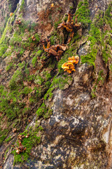 Bark of an ancient tree with some moss and fungus in Srubita Nature Reserve during autumn, Beskid Zywiecki, Poland