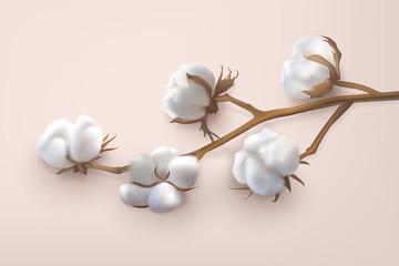 horizontal cotton branch