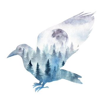 Double exposure composition of a raven with the spruce forest and the rising moon inside. The forest raven in its habitat painted in watercolor.