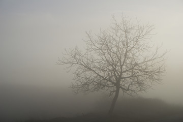 A leafless tree engulfed in thick fog