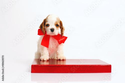 Simple Ribbon Bow Adorable Dog - 500_F_188628170_9UAKWNLzzdtCQtRBxSfsIFU0KHoBe1Wd  Picture_855720  .jpg