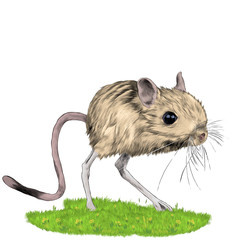 jerboa standing in the grass sketch vector graphics color picture