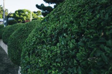 Beautiful gardens in Ipswich City, Queensland.