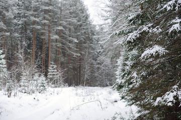 evening winter forest