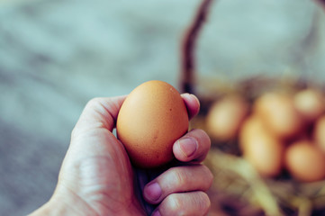 Close up of egg in a white hand with blurred Top view of brown eggs in wooden basket.Hen eggs basket.