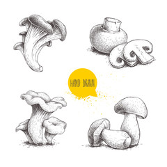 Hand drawn sketch style mushrooms compositions set. Champignon with cuts, oysters, chanterelles and porcini mushrooms. Organic fresh farm food vector illustrations isolated on white background.