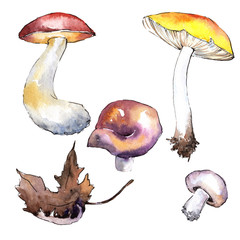 Mushrooms healthy food in a watercolor style isolated. Full name of the vegetable: mushrooms. Aquarelle wild vegetable for background, texture, wrapper pattern or menu.