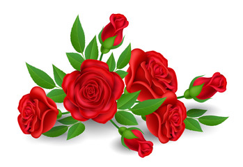 Realistic red rose flower with bud and leaf, isolated on white. Vector illustration for Valentine's day, love and celebration design