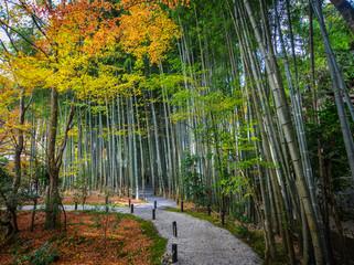 Autumn scenery of Kyoto, Japan