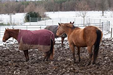Pferde im Winter mit Mantel
