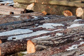 Schneebedeckte Holzstämme am Boden