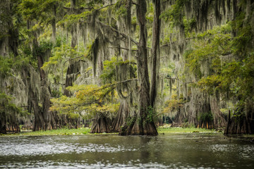 Exotic Caddo Lake State Park in Texas