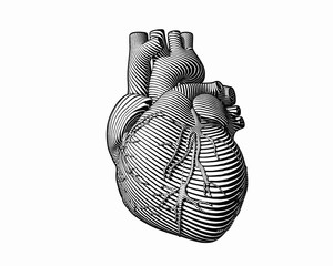 Engraving monochrome human heart style on white BG