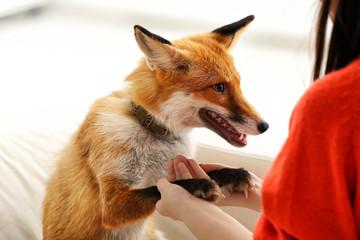 Woman with pet fox indoors, closeup
