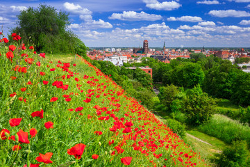 Poppy field in the old town of Gdansk, Poland