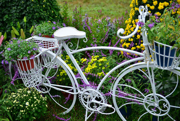 Chrysanthemum exhibition with white bicycle in the garden
