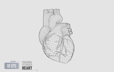 Human heart wireframe isolated on white BG