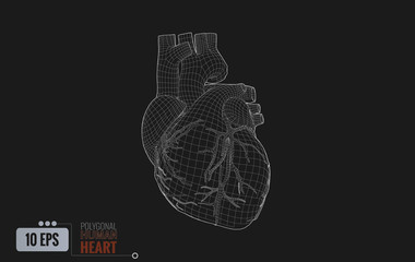 Human heart wireframe isolated on dark BG