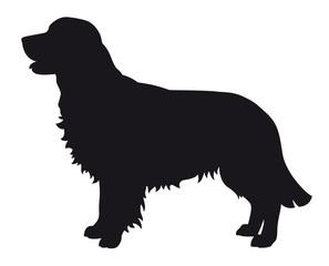 Golden Retriever - Vector black dog silhouette isolated