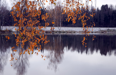 Autumn scene.Fall foliage.Orange leaves of birch tree on a blurred background of the pond in the park.Selective focus.Focus on a foreground.