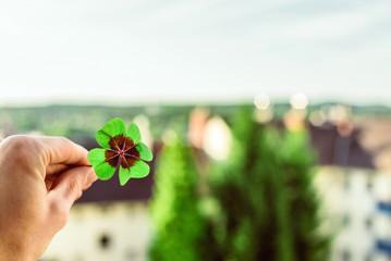 Four leaf lucky clover held by hand against skyline